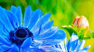 Morning Relaxing Music - Peaceful and Relaxing Piano Music (...