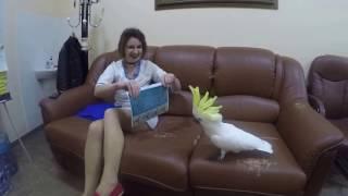 Учим попугая Какаду охотится на людей 🙊🙈
