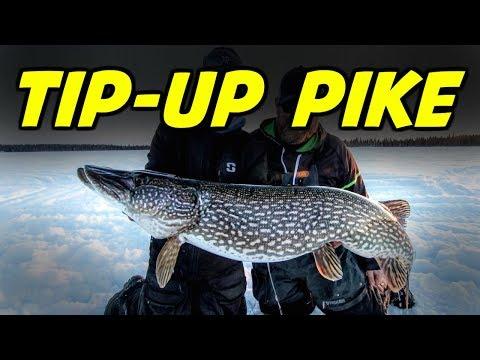 Northern Pike On Tip Ups (Helpful Tips)