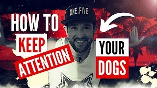 How To KEEP Your DOGS ATTENTION & FOCUS In PUBLIC