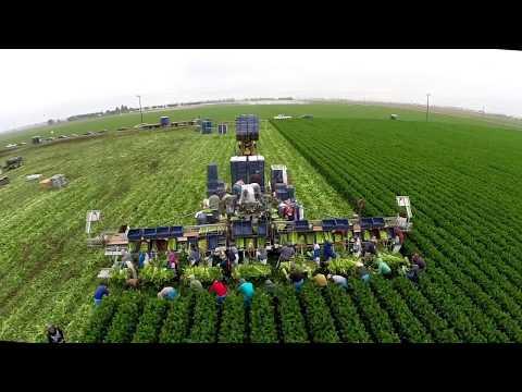 EcoAgHarvester - Celery Harvester