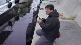 淡路島メバリング・おっきいメバルは何処ですか?の巻 thumbnail