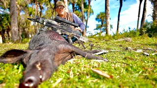 "Awesome WILD BOAR ""Spot n' Stalk"" {Catch Clean Cook} Burris Oracle X"
