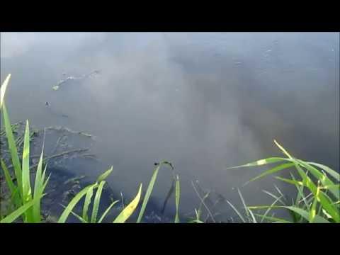 Лидское ЖКХ убивает реки Дитва и Неман. Репортаж.