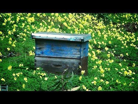 Como criar Abejas: Apicultura. Beekeeping: How to raise bees