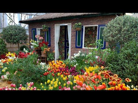 Весна в Москве! Ботанический сад «Аптекарский огород». Выставка тюльпанов