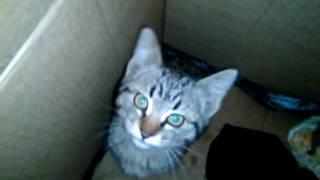 Кошка Дуська В новом домике.Видео для детей про Кошек.