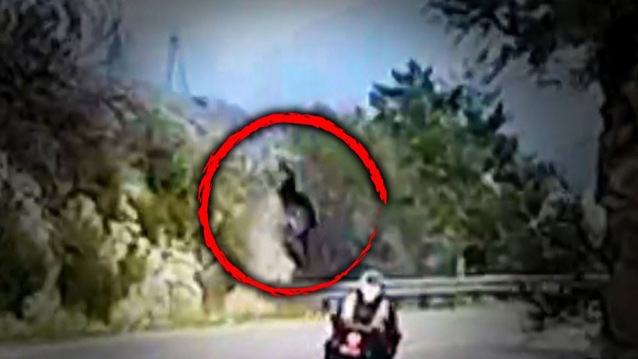 This Video Shows the Horrifying Moment a Woman Was Attacked By a Tiger This Video Shows the Horrifying Moment a Woman Was Attacked By a Tiger new foto