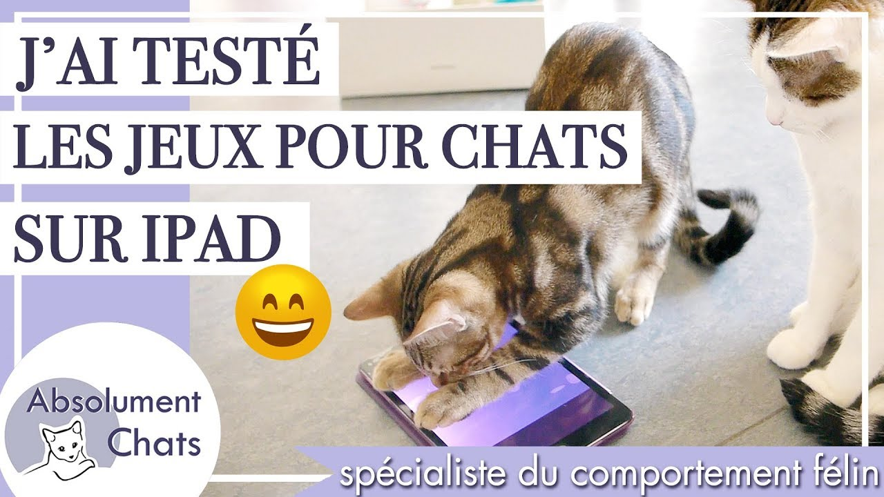 j 39 ai test les jeux pour chats sur ipad jeux purina friskies et autres youtube. Black Bedroom Furniture Sets. Home Design Ideas