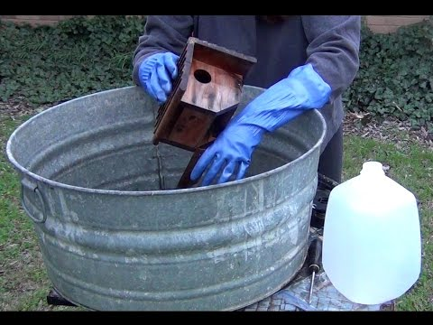 Cleaning and Preparing Your Bird Houses for Spring