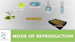 MODE OF REPRODUCTION _ PART 02
