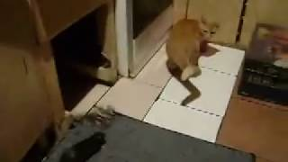 Mouse Teases Cat..Funny Ever | Whatsaap Viral Video