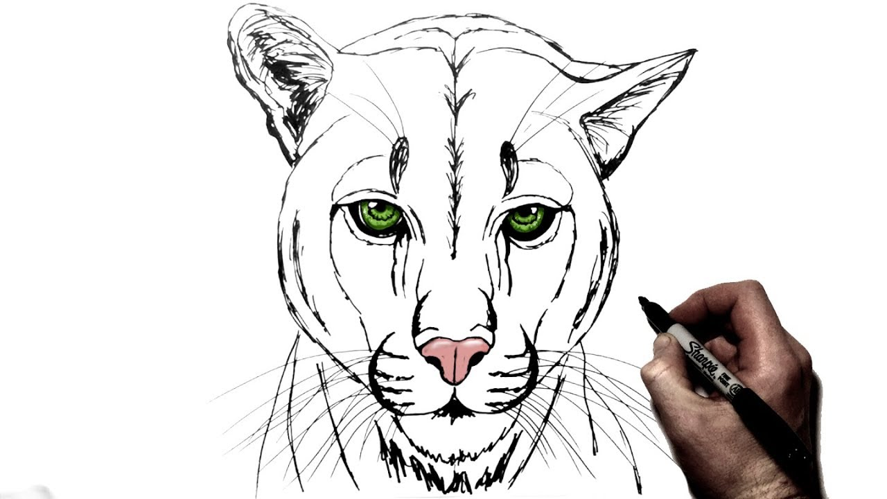 How To Draw A Mountain Lion Cougar Step By Step Youtube