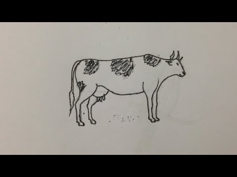 How To Draw A Dairy Cow Step By
