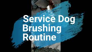 Service Dog Brushing