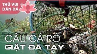 0404 Trời mưa Chú Cháu Câu Cá Rô Giật Liên Tục l Anabas Fishing