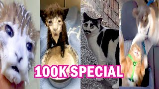 100K SPECIAL  BEST CAT MEMES COMPILATION OF 2020 PART 26