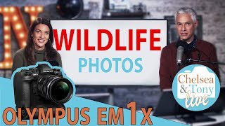 Olympus E-M1X rumors, WILDLIFE Photo review, Chit Chat (TC LIVE!)