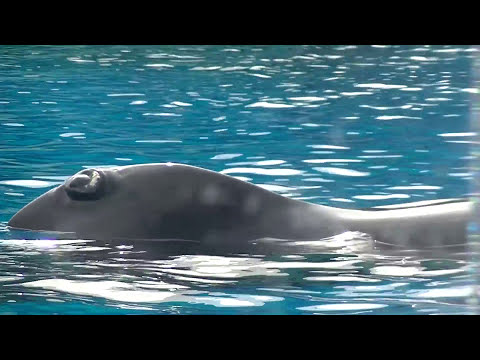 Dine with Pilot Whales - Jan 19 2018 - SeaWorld Orlando
