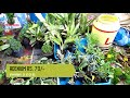 CHEAP FLOWER PLANT SELLER OF GALIFF STREET MARKET KOLKATA INDIA | 1ST JULY 2018 VISIT