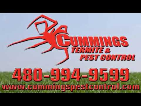 Bee Removal | Cave Creek, AZ – Cummings Termite & Pest Control
