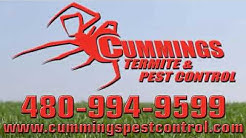 Bee Removal | Cave Creek, AZ – Cummings Termite & Pest Control