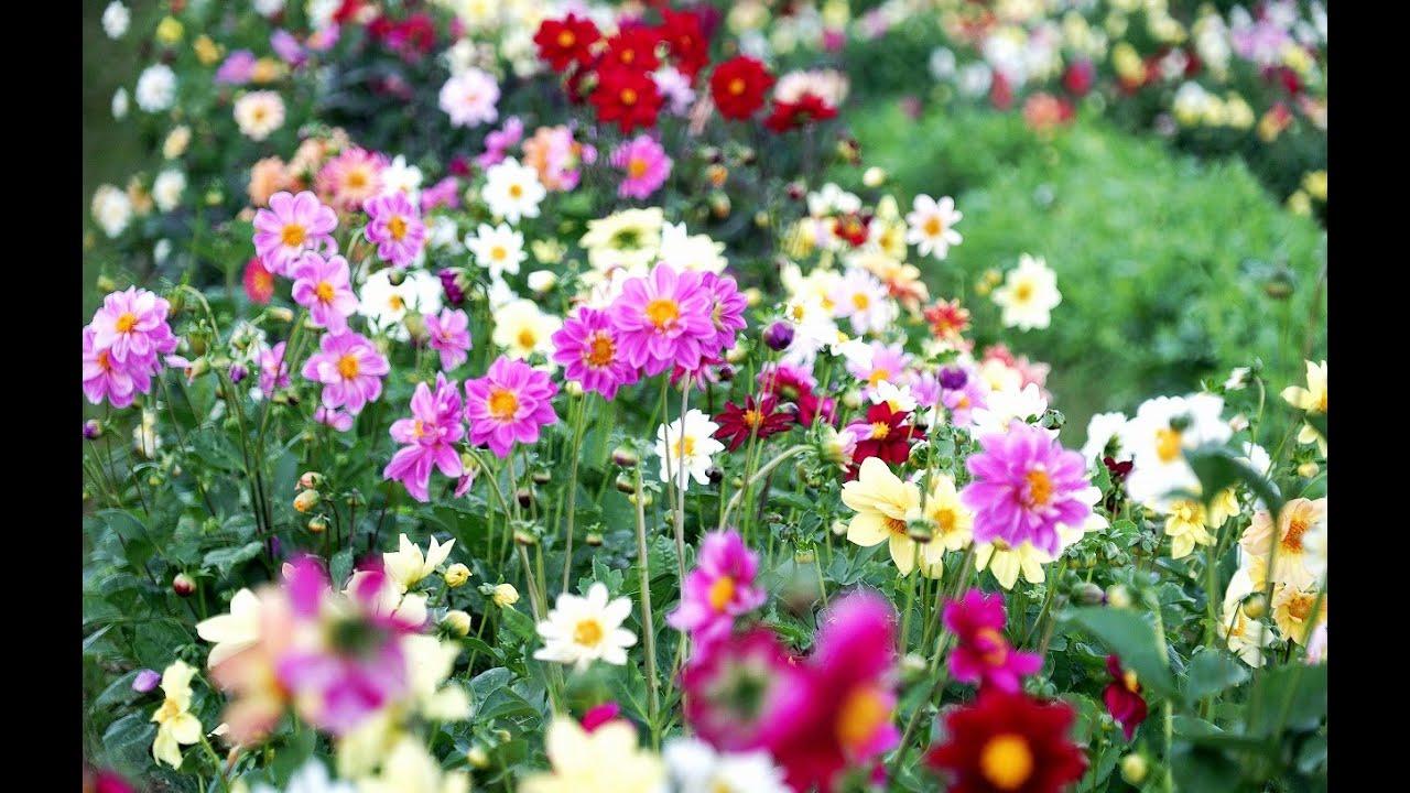 สวนดอกไม้ สวยๆ สีสันสดใส Beautiful flower garden.