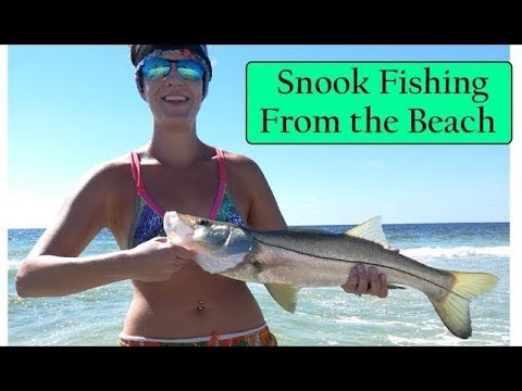 Snook Fishing From The Beach In Sarasota Florida, Gulf Coast