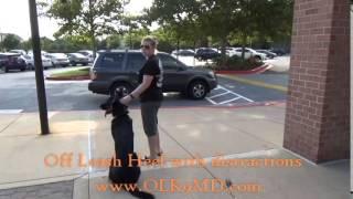 "German Shepherd Mix ""stark"" : Dog Training With Off Leash K9 Training, Maryland"