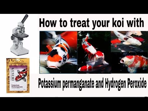 potassium permanganate koi pond treatment