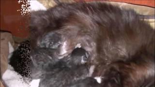 Первые роды нашей кошки