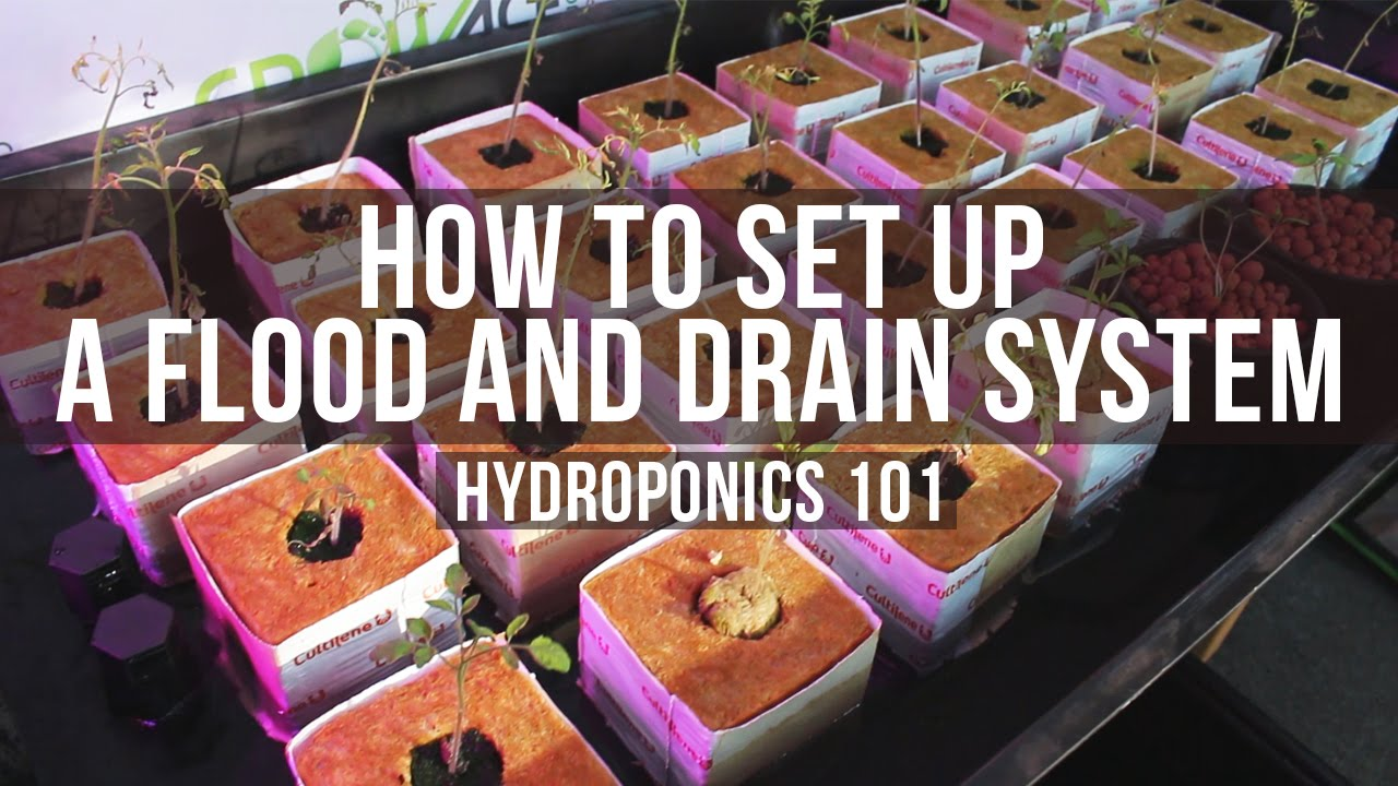 How to Set Up a Basic Flood and Drain (Ebb & Flow) Table for Hydroponics