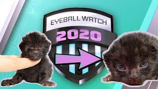Eyeball Watch 2020: Official Kitten Championship