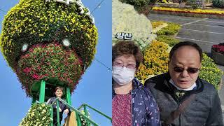 2020.10.27 양산 국화축제 (부모님×누매)