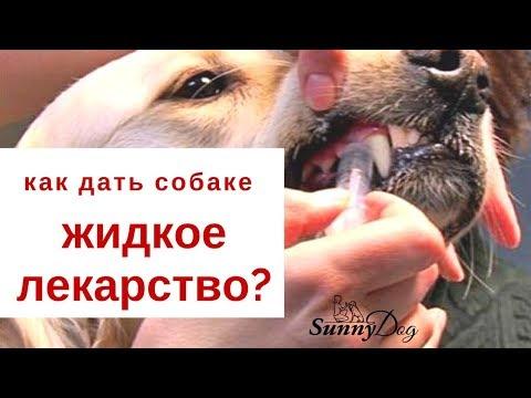 Как дать собаке энтеросгель