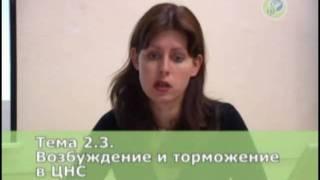 Ковалева А.В. Из видеокурса
