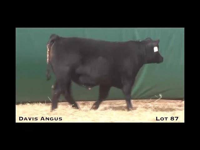Davis Angus Lot 87