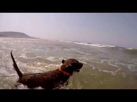 WALLY ADVENTURES: first day at the beach ! GOPRO HERO 4