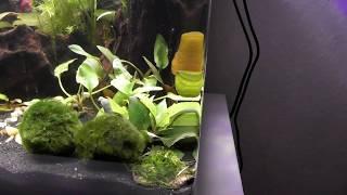 Garnelen ziehen in das Aquarium ein