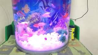 Boyu importan off sargal fish tank ( gold fish , Cora fish , cozhi Corp fish )