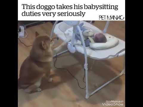 Doggo takes babysitting duties vary seriously! - YouTube