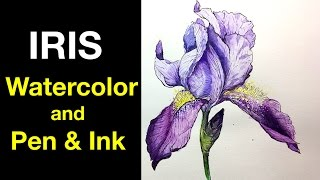 Watercolor | Pen & Ink Study e4 | Iris Flower