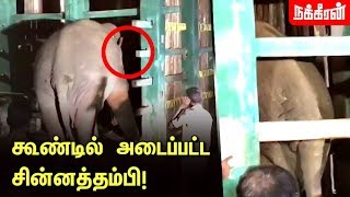 Wild elephant Chinnathambi Captured & Relocated in Cage