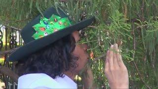 Зачем перуанский активист женился на дереве? (новости)