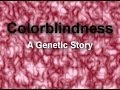 Color Blindness: A Genetic Story