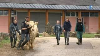 Des lycéens préparent leurs vaches pour le Salon de l'agriculture 2017