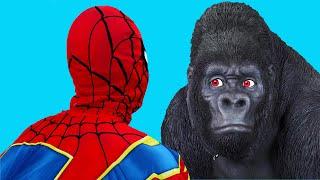 Spiderman VS Gorilla
