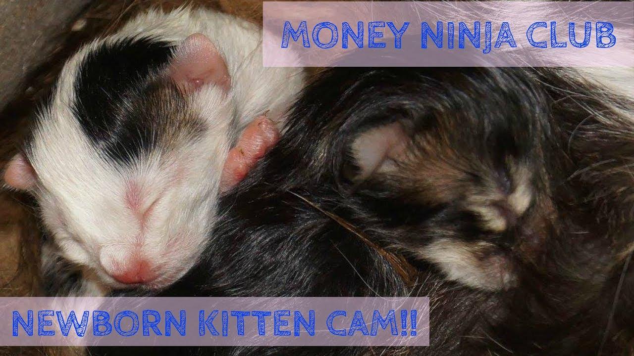 LIVE KITTEN CAM Feral Mama Cat Just Gave Birth to SIX Newborn