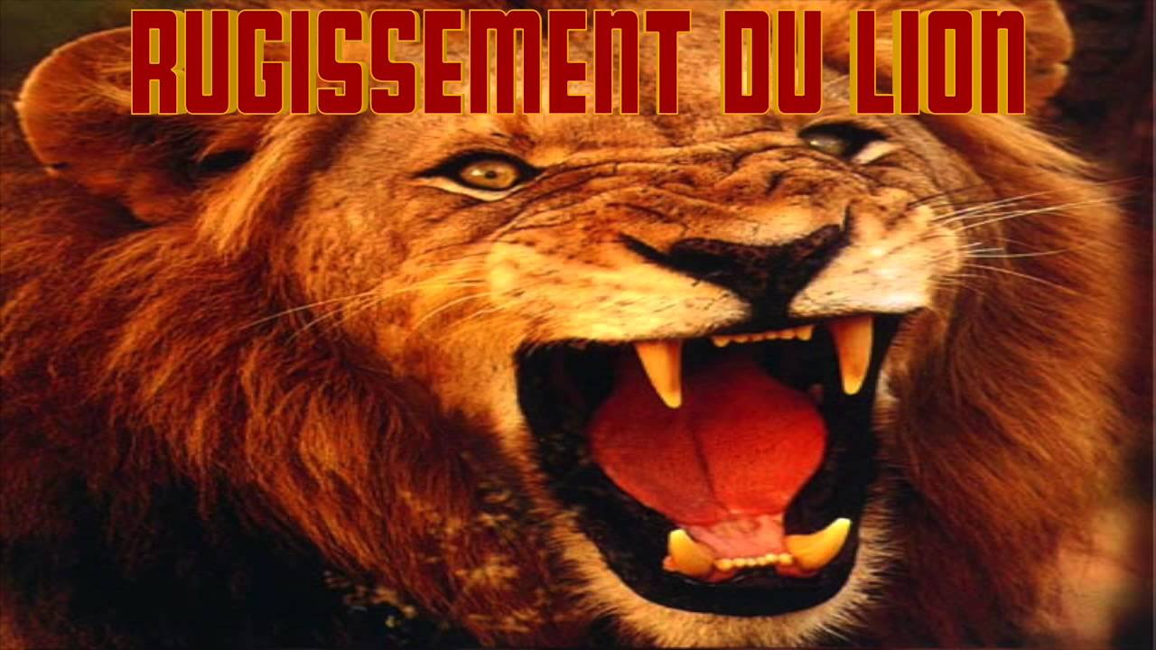 rugissement lion mp3
