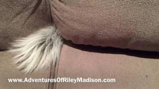 PET SKUNK PLAYS HIDE AND SEEK | WEIRD PETS |PET SKUNK